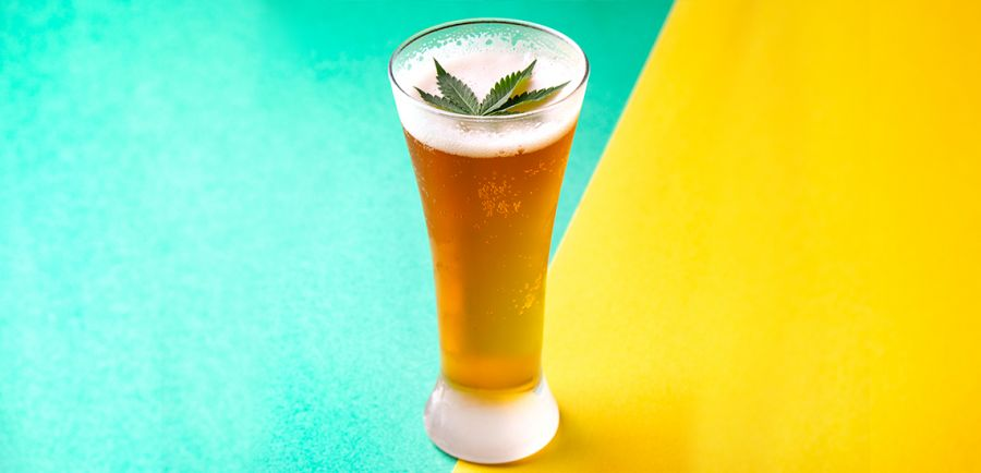 Photo for: Cannabis Infused Beers - the next beach buddy you would want to chill with