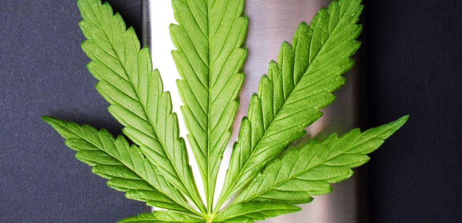 Photo for: The Anatomy of a Cannabis Trademark